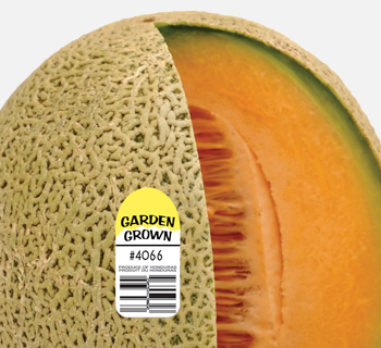 Produce label on a cantelope.